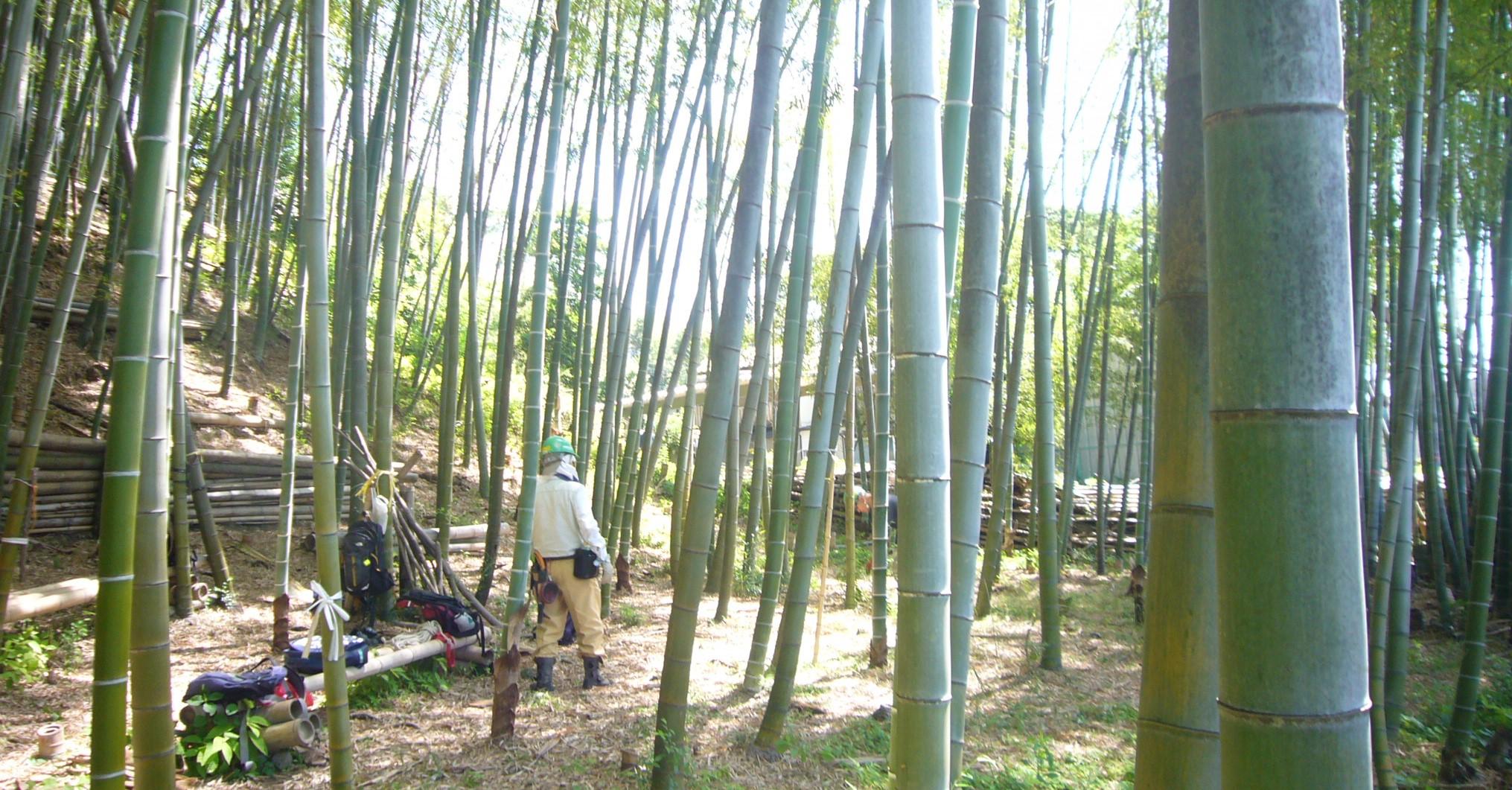 竹林整備活動